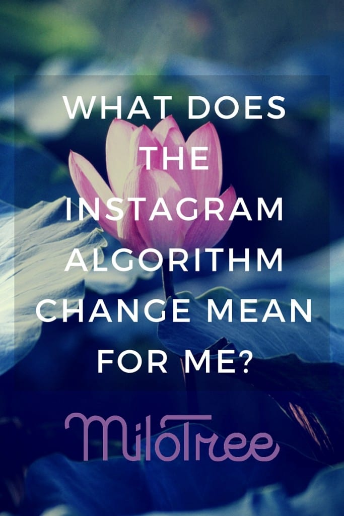 What Does the Instagram Algorithm Mean for Me? | MiloTree.com
